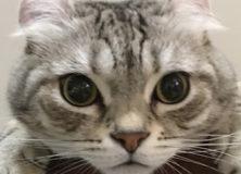 【衝撃】猫がなぜニャーと鳴くか。かわいすぎる理由が話題に!